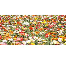 Magic Carpet Photographic Print