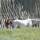 Big Muddy Horses by Carla Shirley