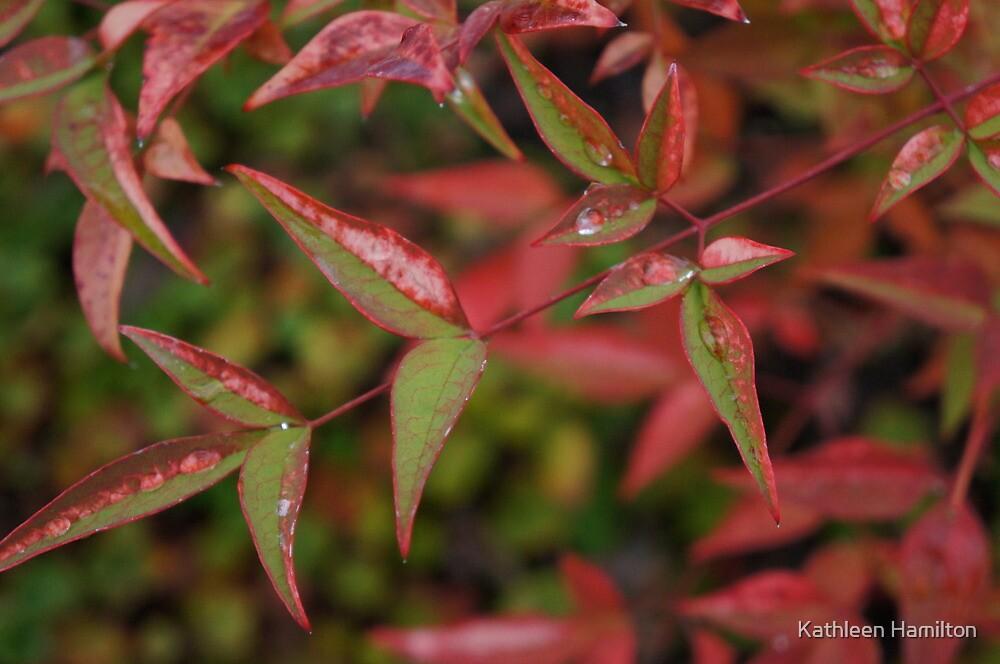 Autumn jewel tones by Rainydayphotos