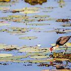 Early Bird by Bhavin Jadav
