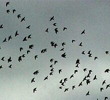 Birds in Flight by quirinusriddle