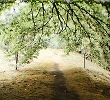 One of many Paths of life by Brandon Taylor