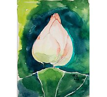 New Born Lotus Photographic Print