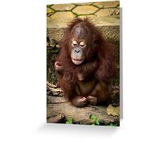 Young Orphan Orangutan ~ Borneo Greeting Card
