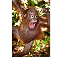 Young Orphan Orangutan ~ Borneo Photographic Print