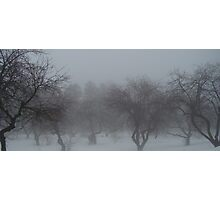 Mystical Trees in Fog Photographic Print