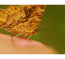 close touch Photographic Print