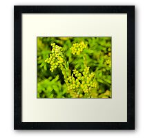 green flower Framed Print