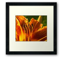 inside the orange flower Framed Print
