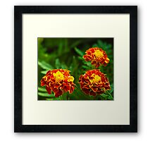 3 flowers in a frame Framed Print