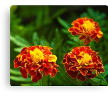 3 flowers in a frame Canvas Print