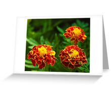 3 flowers in a frame Greeting Card
