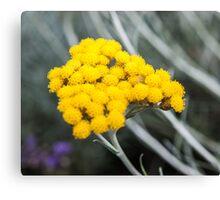 nice yellow flower bokeh Canvas Print