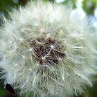 Dandelion by 60nine