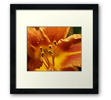 Orange flower petals macro Framed Print