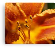 Orange flower petals macro Canvas Print