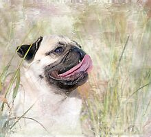 Pug Happiness by Susan Werby