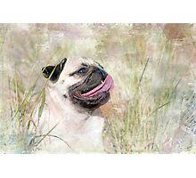 Pug Happiness Photographic Print