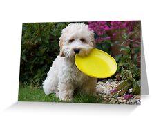 Cockapoo puppy Greeting Card