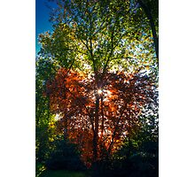 """""""FALL"""" in """"LOVE"""" Photographic Print"""