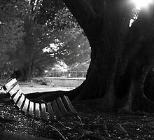 Shine a light on.. by batchesnaps35