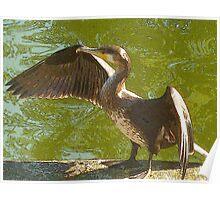 Cormorant Poster
