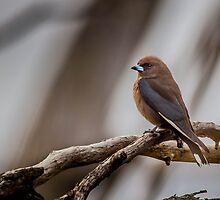 A Bird by Bhavin Jadav