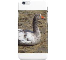 A Sitting Goose  iPhone Case/Skin