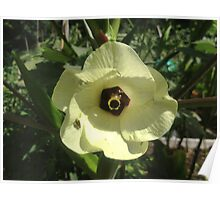 Giant Yellow Hibiscus 'Old Yella' Poster