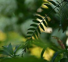 perfect (lazy leaf) afternoon by byzantinehalo