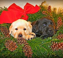 Christmas is rather tiring isn't it! by DennisThornton