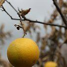 Depressing Fruit by Avner