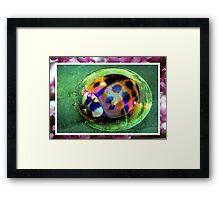 Bubble Beetle Framed Print