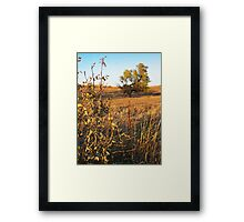 Out Standing in the Field Framed Print