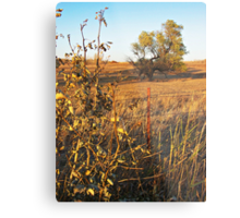Out Standing in the Field Metal Print