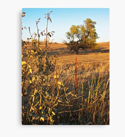 Out Standing in the Field Canvas Print