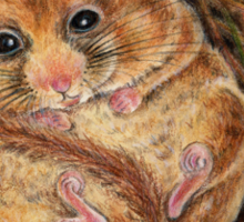 Hazel Dormouse (Muscardinus avellanarius) Sticker