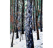 'Woods in Snow' Photographic Print