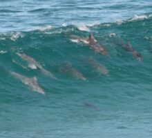 Surfing Dolphins. Sticker