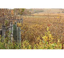 Gate to the Pasture Photographic Print