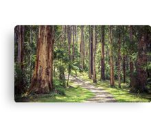 Mountain Ash in the Dandenongs - Melbourne, Victoria Canvas Print