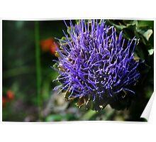 September Sun: Artichoke Flower Poster