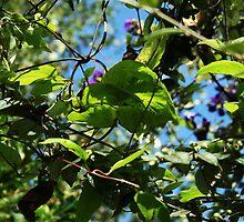 September Sun: Web of Flowers by Áine Warren