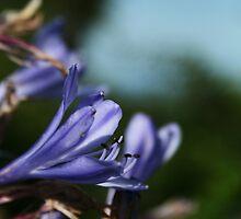 September Sun: Purple Flowers by Áine Warren