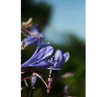 September Sun: Purple Flowers Photographic Print