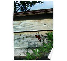 September Sun: Butterfly Poster