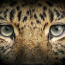 Eyes of the Amur by Mark Hughes