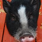 HAROLD PIGGIE FACE by Shanklinthomas