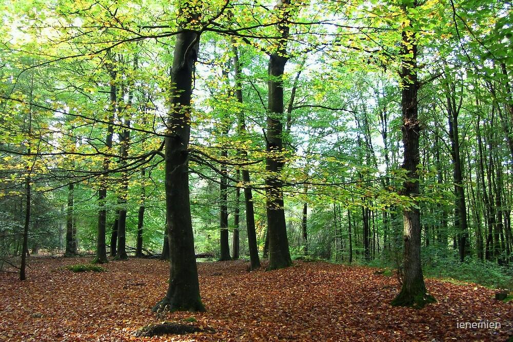 Autumn Tree by ienemien