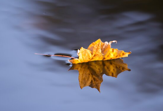 Autumn Leaf Floating On Silky Water by daphsam
